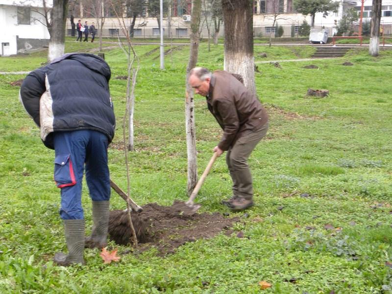 den na drvo (5)
